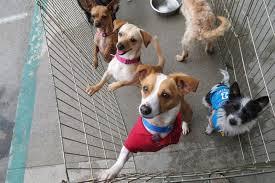 All Pets Wellness Foundation